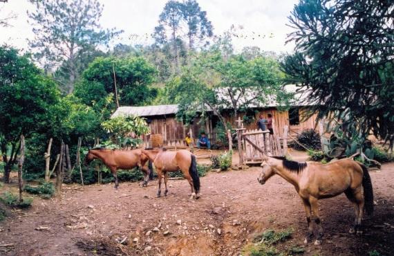 Comunidade remanescente quilombola do Varzeão. Doutor Ulysses (PR).