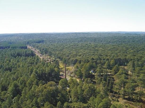 Floresta Nacional de Irati