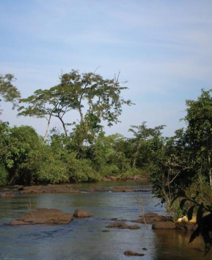 Rio Iguaçu (PR).