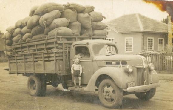 Carregamento de erva-mate no início do século XX.