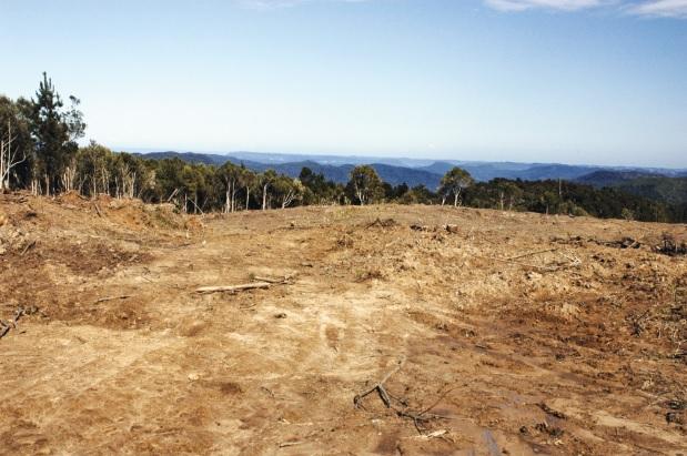 Desmatamento próximo à Reserva Biológica do Sassafrás, 2008. Doutor Pedrinho (SC).