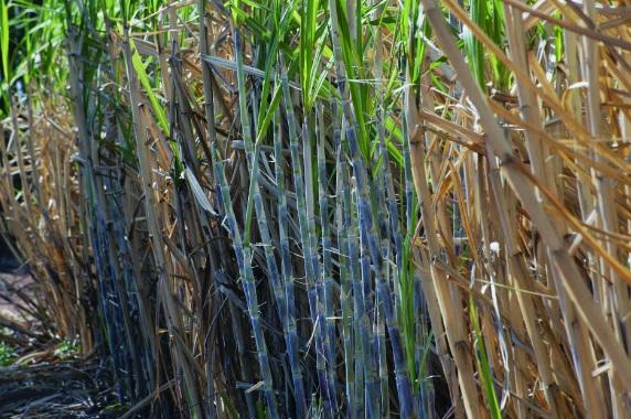 Catanduva está instalada a Associação dos Produtores de Açúcar e Álcool (Biocana)