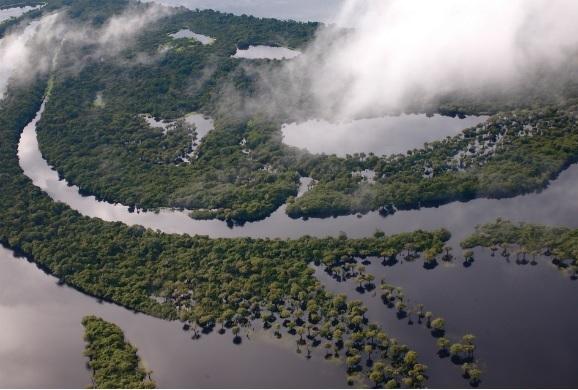 Biomas brasileiros  - São Paulo