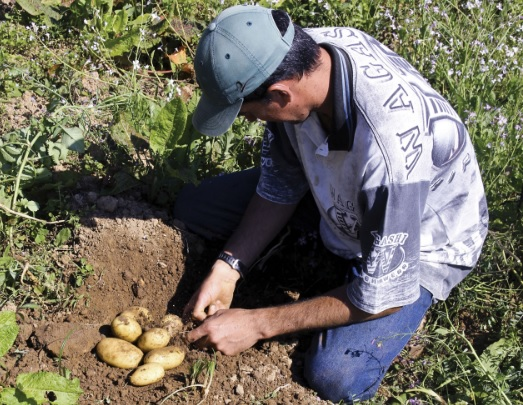 Agricultura planejada com homem trabalhando de forma artesanal